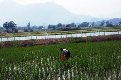 淡水小龙虾养殖的水质环境要求