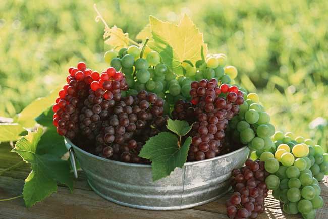 葡萄是热性还是凉性?