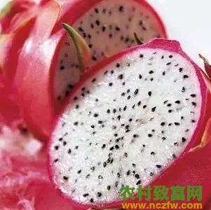 红心火龙果和白心火龙果有什么区别