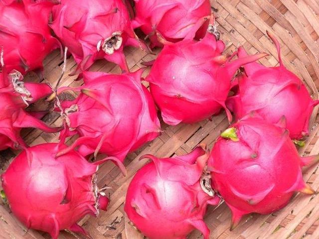 冬天吃火龙果好处多,可应该买红心的还是白心的?