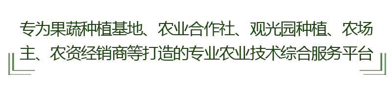 火龙果常用嫁接方法详解!