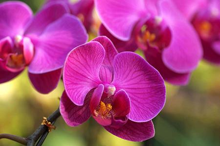 适合家里养的32种花,好养又好看,必需需要养一盆!