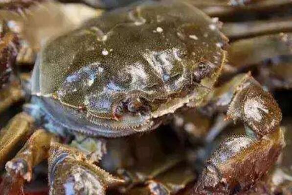 当天死掉的螃蟹能吃吗 吃了死螃蟹怎么解毒