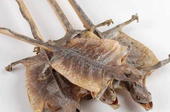 蛤蚧油有什么功效和作用以及禁忌