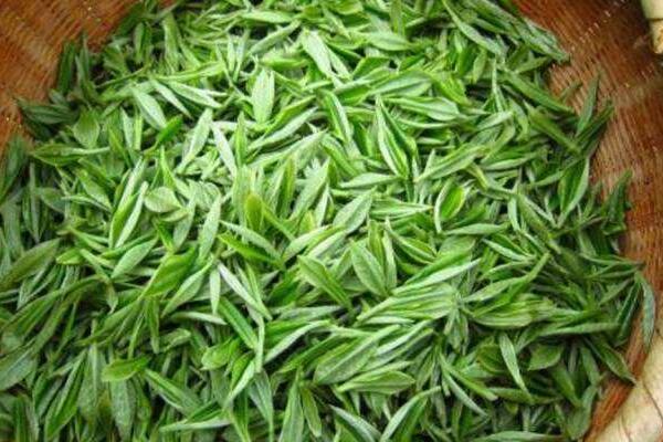 茶氨酸的危害 茶氨酸吃多的副作用