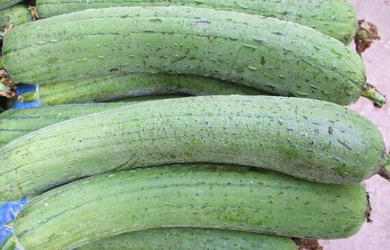 南方水瓜有什么功效和禁忌
