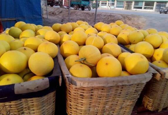 洋香瓜是什么瓜 洋香瓜有什么功效和作用
