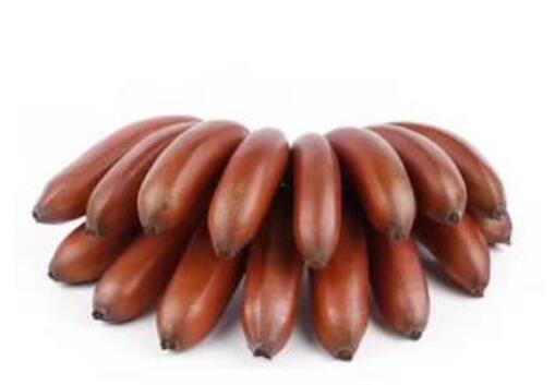 美人香蕉有什么功效和作用