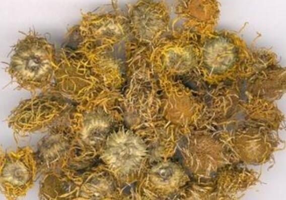 蜜旋覆花有什么功效和作用