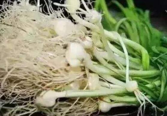 野小蒜怎么做好吃 野小蒜的家常做法大全