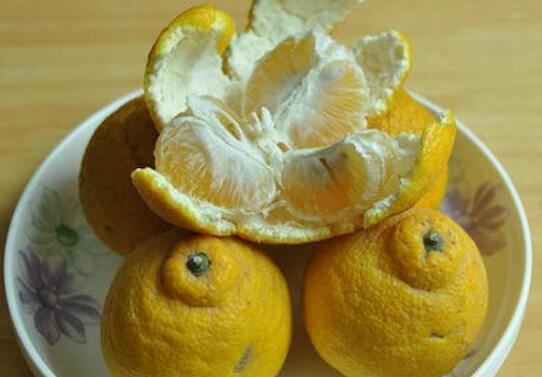 臭柑子皮有什么功效和作用