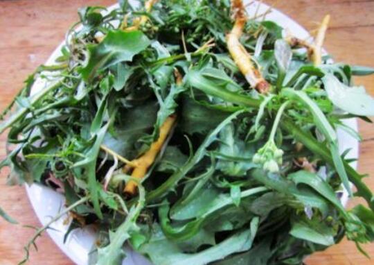 农村清热解毒的野菜有哪些