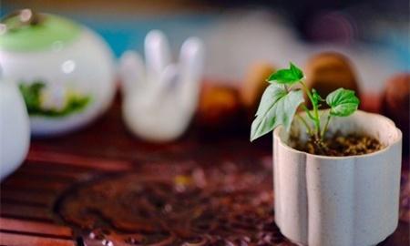 红薯什么时候种植最好