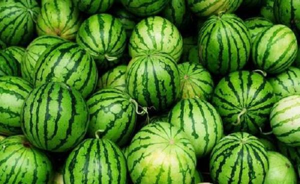 西瓜种子可以直接种地里吗 西瓜多长时间可以结果