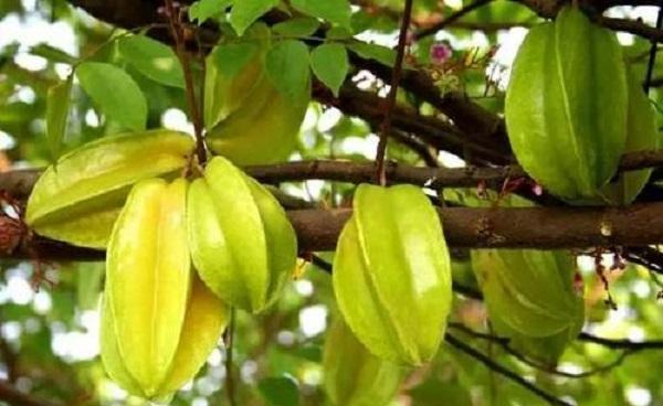 浆果类水果有哪些 经常遇见浆果大全