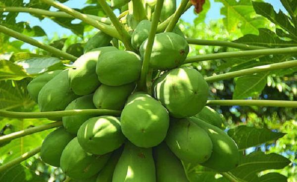 来海南必买的十大水果有哪些