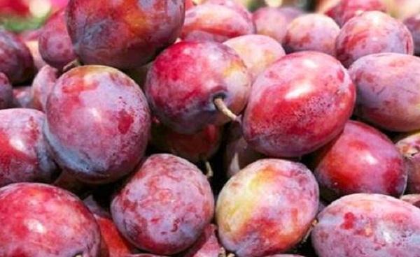 红色的像李子的水果叫什么 怎么种植这样的水果