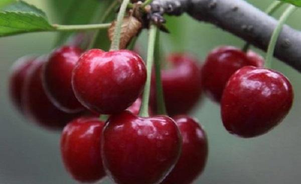 浆果类水果有哪些 浆果名称大全