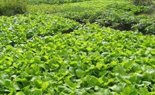 蔬菜是植物吗 1年四季种什么蔬菜好