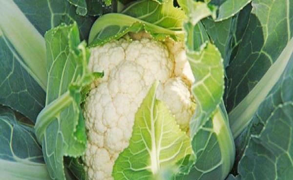 花菜是什么类蔬菜 每亩产量是多少