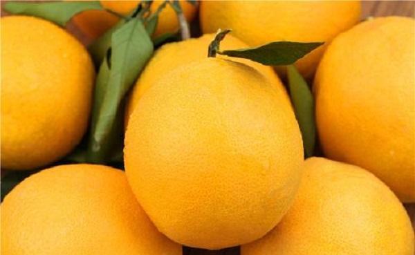 橙子怎么来的 产地是哪里