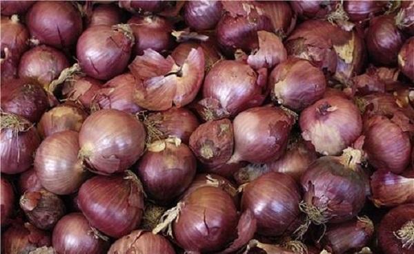 洋葱能自己留种子吗 怎么种植洋葱