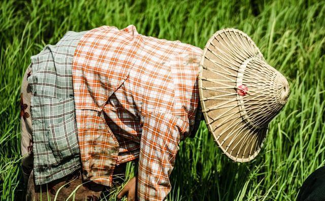 插秧腰酸背痛一整天才80元,为什么许多农村妇女抢着干?