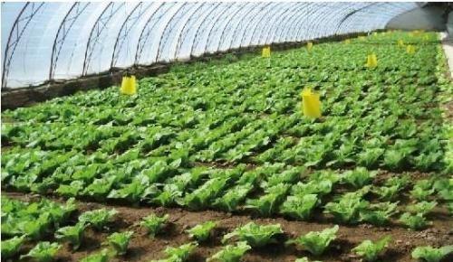如果你是农民,什么情况下才会保证不施用化肥,不喷洒农药?