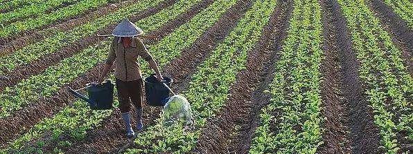 农村青年都到城里去住了,谁来种绿色食品供应城市人呢?