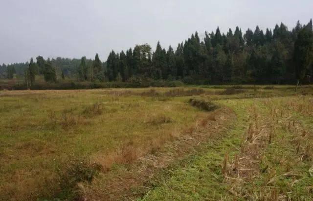 农村耕地撂荒的越来越多了,土地流转是最后的途径吗?