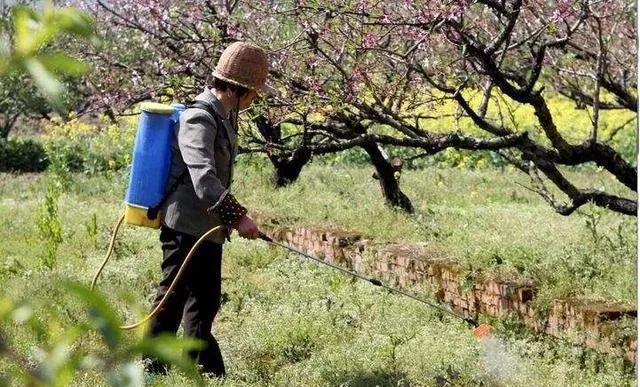 一亩地几块钱就能很好的防治杂草,有些人花了几十元钱还没治好,如何提高除草剂药效?
