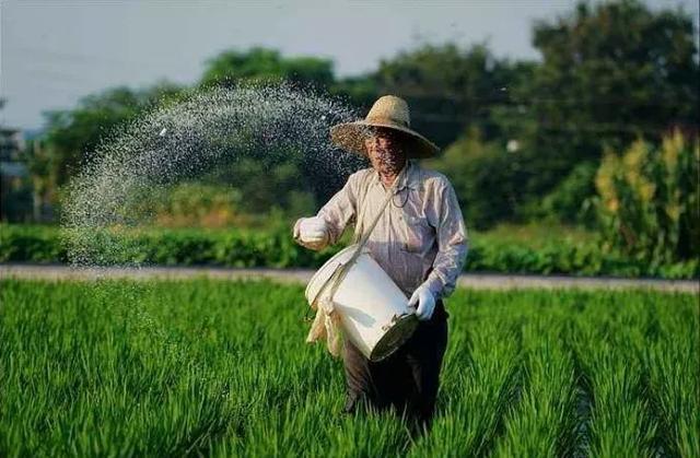 农田是用的化肥越多越高产吗?